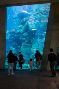 Japan (2019) - 045 Oita Umitamago Aquarium